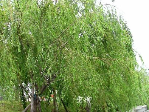 http://album.sina.com.cn/pic/485fe2d543fd04d47b07f