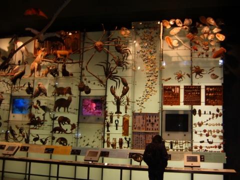 美国自然博物馆照片 - 叶红 - 给自己一个理由,让自己活得更精彩