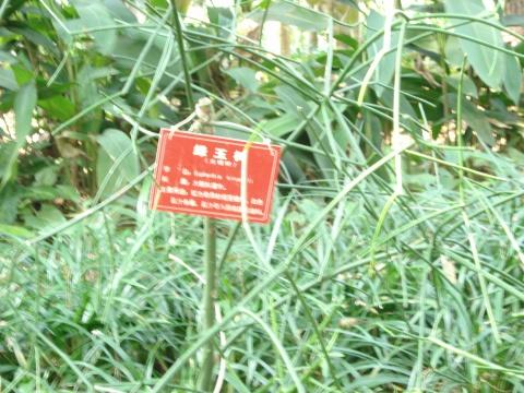 海南行摄·植物篇 - 赵小波 - 赵小波的博客