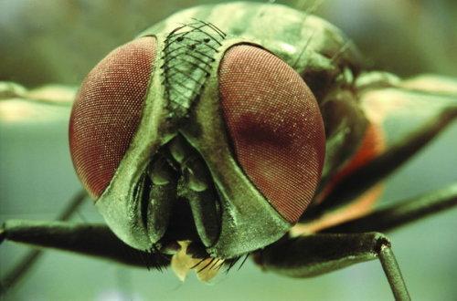 哲夫:长篇《黑雪》有关苍蝇的描写_地球,猫爪下最后一只瓢虫_新浪博客 - z51 - 哲夫网易博客