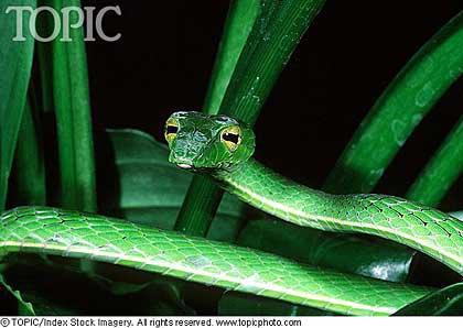一部分毒蛇