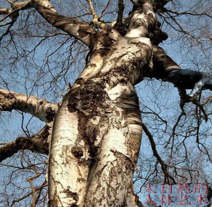 (疏勒河的红柳)你的春之心曲 - 疏勒河的红柳 - 疏勒河的红柳
