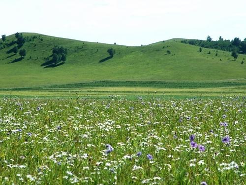 美丽的草原 - 十年剑 - 十年剑的博客