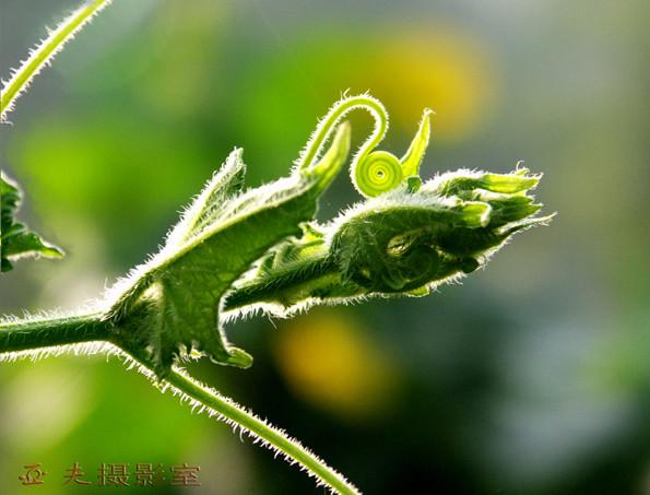 (原创)农家菜园之一 - 高山长风 - 亚夫旅游摄影博客