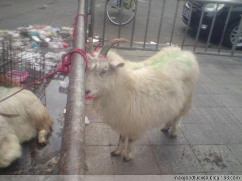 家附近一猪肉档~有活羊!囧 - maxgoodlucksa - sa耽と声sa
