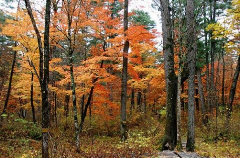秋 - autumn65 - autumn65的博客