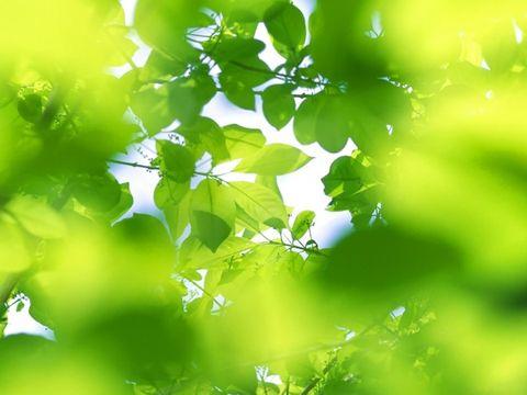 (原创)四月 - 真水无香  - 香格里拉 花开的地方