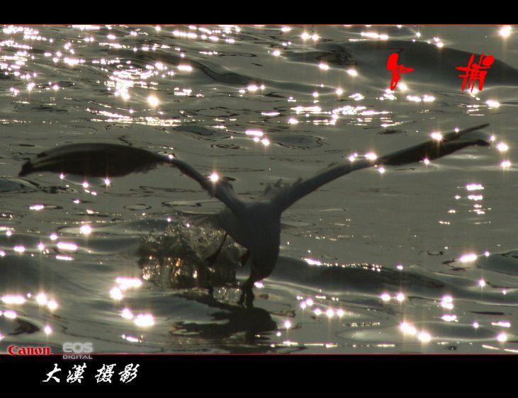 沙鸥翔集(三)【大漠摄影】 - 大漠独行 - 大漠深处camel的博客