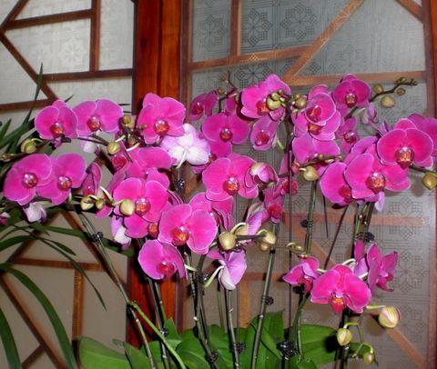 蘭花苑(摄影作品) - 林子 - 林子的博客