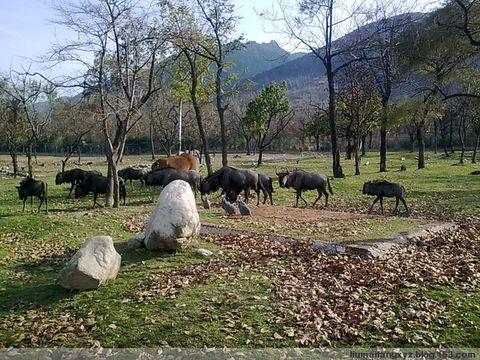 西安秦岭野生动物园即景 - 雨中情 - 雨中情的博客