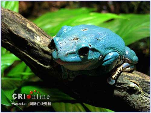 如此好 色 的青蛙王子 呵呵 组图