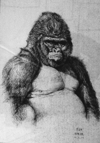 欣赏(8):產生廣告效益的大猩猩 - 蓝桑的画中话 - 画中话