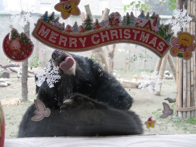 圣诞快乐!(下) Snoopy的圣诞之吻  - Jill - Jill的博客