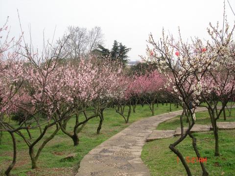 【原创】都市的春天 - 大隐吕山 - 大隐于朝 中隐于市 小隐于野