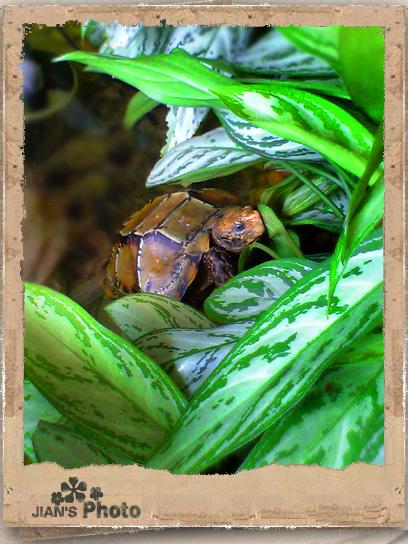 如何养好乌龟