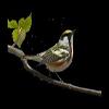 最全最漂亮的鸟类透明flash动画效果