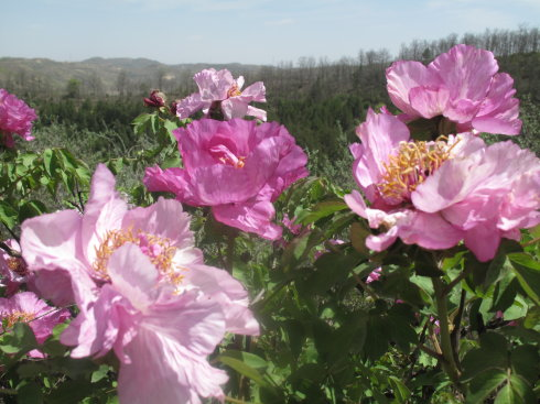 23019    有了春天便有了一切 - 一云吉亚 - 一云吉亚的博客