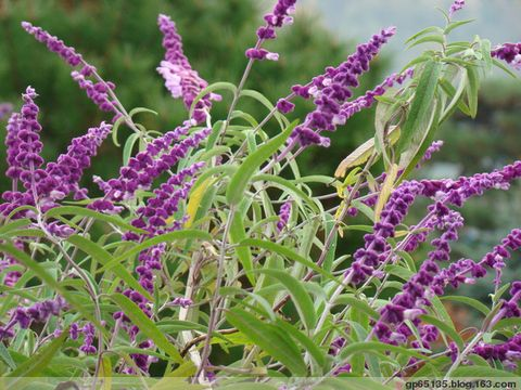 季节的花朵 - 六月荷花 - 六 月 荷 塘