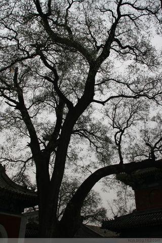 游万寿寺 - Lilac - Lilac