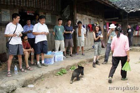 (转)四川茶农一家与小黑熊的幸福生活 - 李英健 - 我还在这儿,而时间飞快~