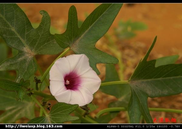 【摄影】新年第一拍 - 大漠孤烟 - 大漠孤烟的博客
