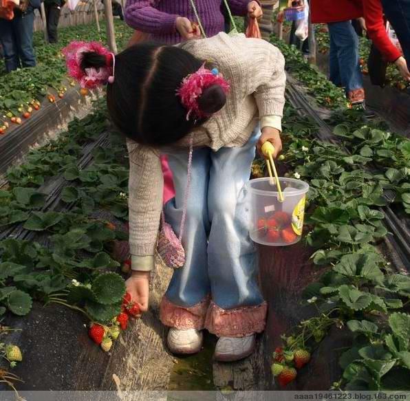 草莓姑娘摘 - 滴墨斋主 - 滴墨斋主的后花园
