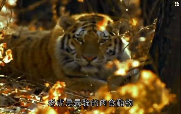 求狗被画成老虎的图