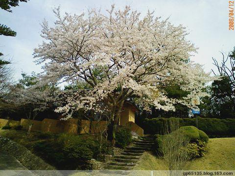 荷花带您欣赏~~日本的樱花 - 六月荷花 -  六 月 荷 塘