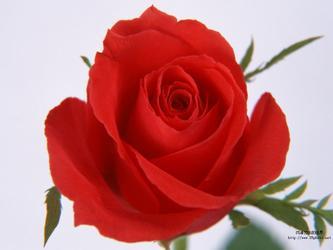 送人玫瑰,手有余香