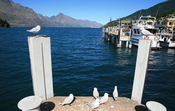 体验100的纯——新西兰考察记1-不一样的住宿… - 王志纲工作室 - 王志纲工作室