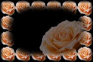 玫瑰花语 - 红酒百合 - 百合伊甸园