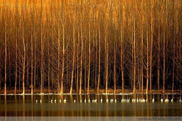 [原创摄影]天鹅城湿地风光 - 无忌色影 - 行行摄摄