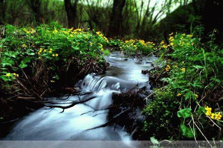 原创散文之《溪水潺潺》 - 圣地白鸽 - 圣地白鸽(莺鸣)的鸟巢