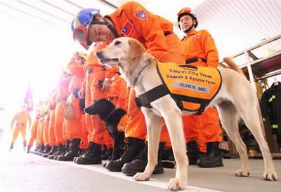 充满灵性的搜救犬 - MING - MING-BLOG