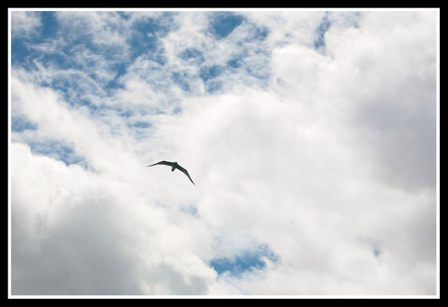(原创)西藏(2)——青海湖 - 照看天下 - 照看天下的博客