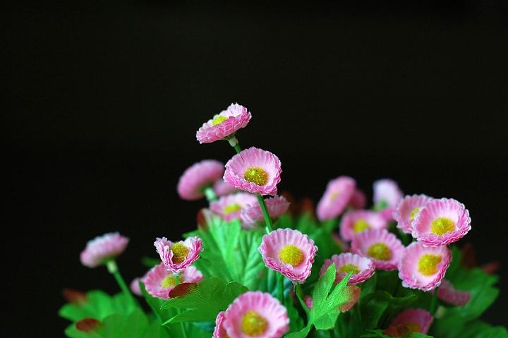 原创【假花真花】 - 阿新 - 阿新原创摄影小屋