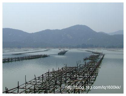 美丽的横琴岛(1)——蚝田风光 - lq - LQ的博客