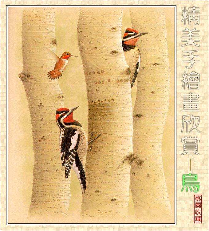 精美手绘画-鸟 欣赏(21P) - 桃源居士 - 桃源居