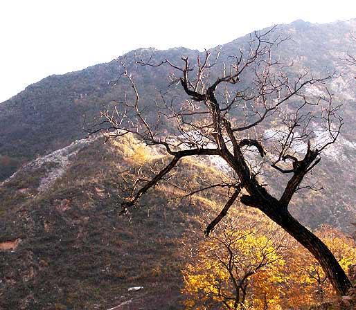 (转载)悬崖边上的树 - 梦 - 梦的博客