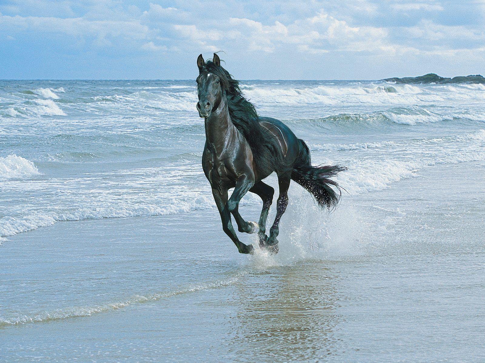 【现代诗】 我是一匹来自南方的马 (原创) - 博雅.wolaxiao - 博雅.wolaxiao的博客