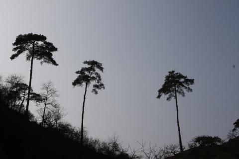 天姥山及其它 - 汪洋 - 汪洋的博客