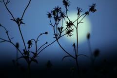 美丽的孤独(原创) - 冰芯雪蕊 - 冰天雪地的足迹