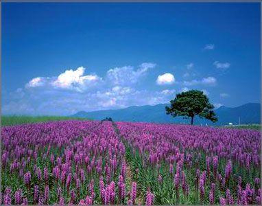 我最想见到风景很美的博客 - 蓝天翱翔 - 心的遨游