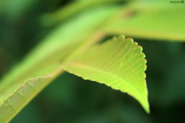 """【雕""""虫""""小技】微距生态——《树摄影》第六集 - 夜倾城 - 永不褪色的只有黑色"""
