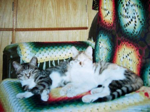 我最喜欢的猫  续之五  原创 -         香草 - 香草的艺术小屋