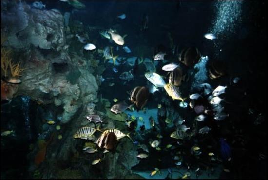 引用 银狐之梦 的 神奇的海底世界 - 3 - 冬雪 - 冬雪的博客家园