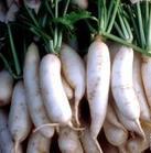 五行蔬菜汤强健法【一】 - 雨燕芳菲 - 雨燕芳菲