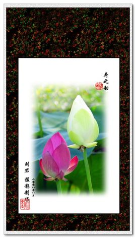 [原创摄影]   ---祥荷---(刘君摄影作品选) - 刘君 - 刘君 原创摄影之窗