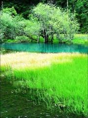 最美好的风景    丁莹林 - 绿色天堂 - 绿色天堂