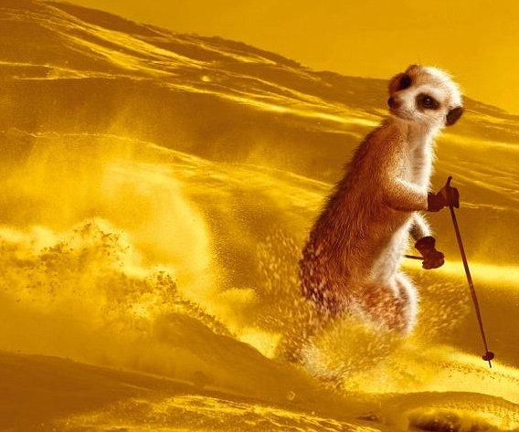 可爱猫鼬大玩极限运动,古灵精怪妙趣横生(组图) - 刻薄嘴 - 刻薄嘴的网易博客:看世界